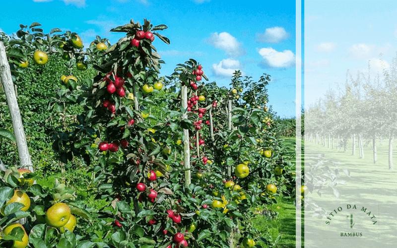 Tenha Várias Mudas Frutíferas em Seu Jardim
