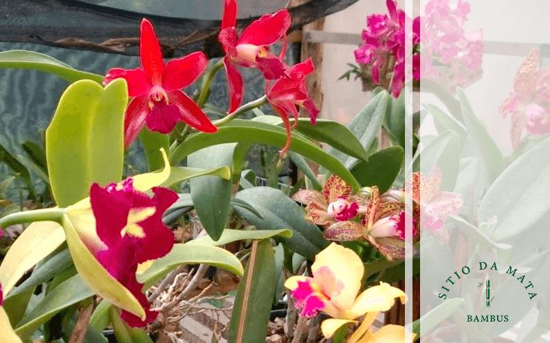 Como Devo Molhar Orquídeas