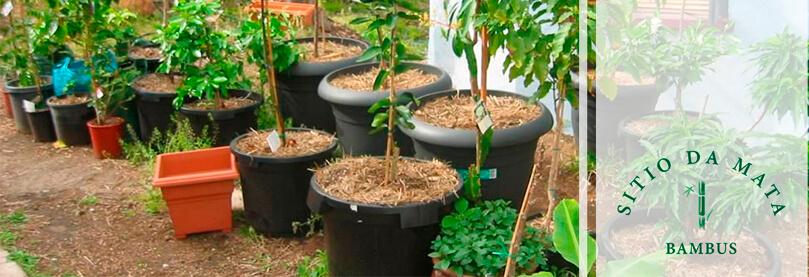 10 Dicas de Como Plantar Frutíferas em Vasos