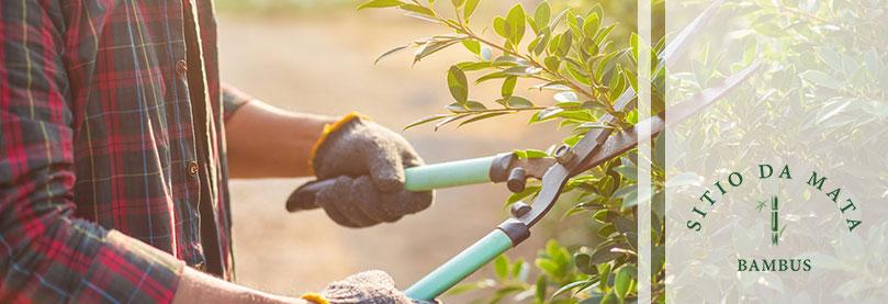 Dicas de ferramentas para jardinagem